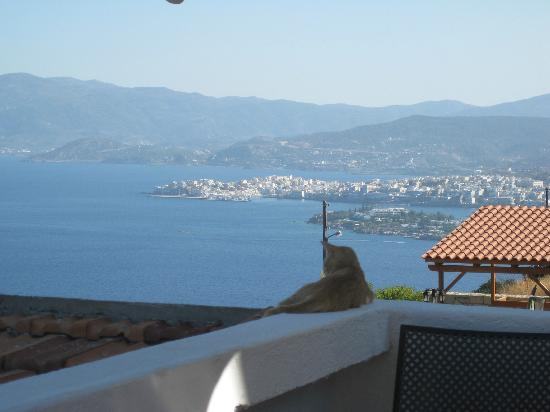 Villa Olga - Studios & Villas : Vue depuis la piscine sur la baie et le chat