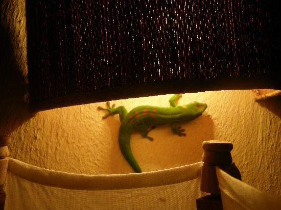 Nature Lodge: Geco sotto la lampada