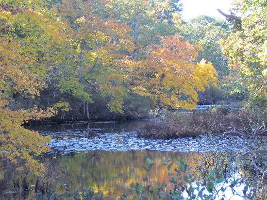 Wellfleet Bay Wildlife Sanctuary : On the Silver Spring Trail.
