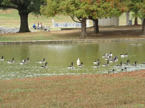 Freedom Park: Wildlife