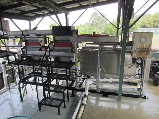 Greenwell Farms: Coffee Cherries Weighing Station