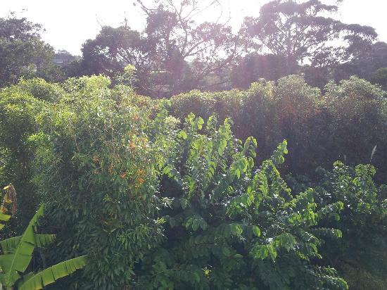 Quinta de Santana: jardim