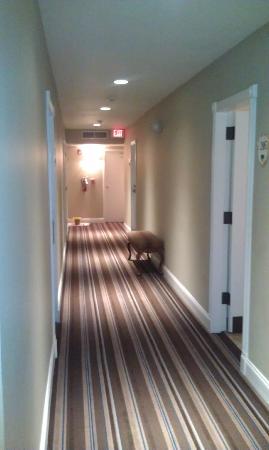 Impala Hotel: Hallway
