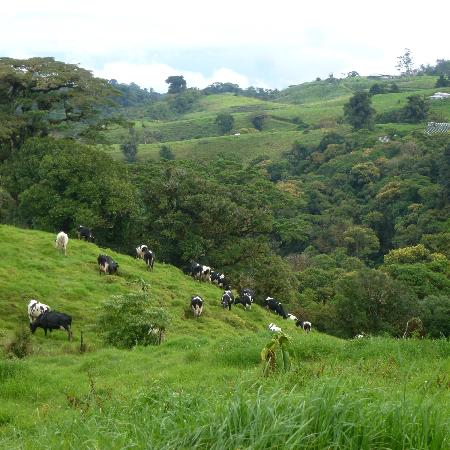 Poas Volcano Lodge: the pasture that surrounds the lodge