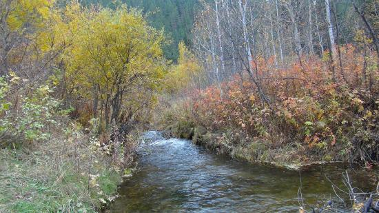 Spearfish Canyon: Behind the trees in the Dances with Wolves area is this very pretty river