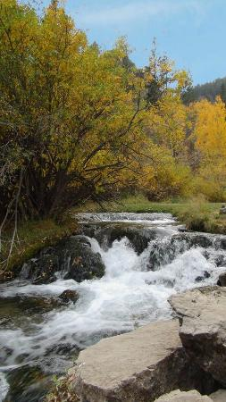 Spearfish Canyon: Spearfish colours