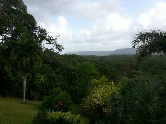 Daintree Manor B&B: The view from the large, comfy private veranda. The perfect reading spot!
