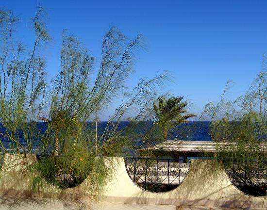 Dahab Paradise: просто вид с балкончика рядом с нашим номером