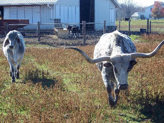Dutch Creek Farm Animal Park: Coming to visit the wagon