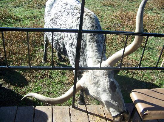 Dutch Creek Farm Animal Park: Don't let the horns scare ya.. he is gentle