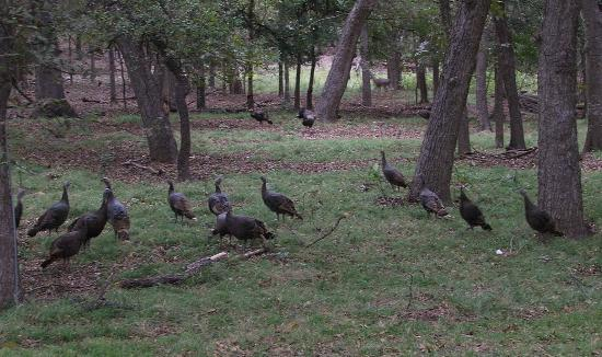 Utopia on the River: Wild turkey and deer outside your window.