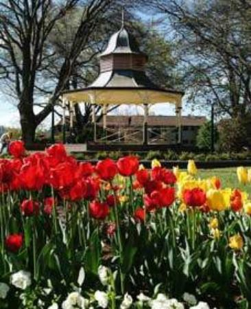 The Manning Motel: tulips in Bowral