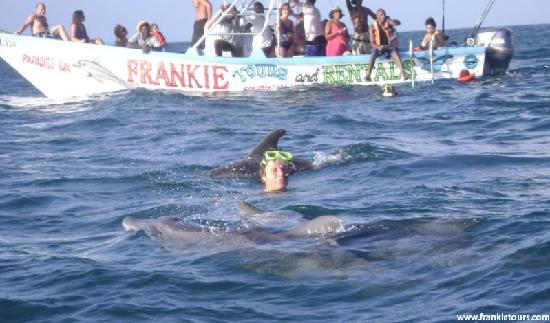 Mount Irvine, Tobago: Swim with Dolphins