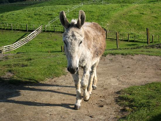 Doolan's Country Retreat: one of the 4 donkeys