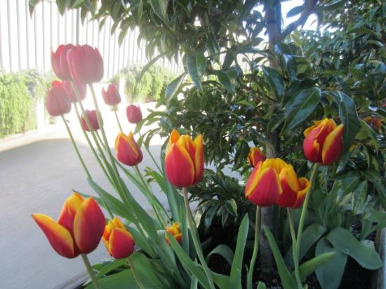 Montrose Bed & Breakfast Wanaka: Tulips @ Montrose