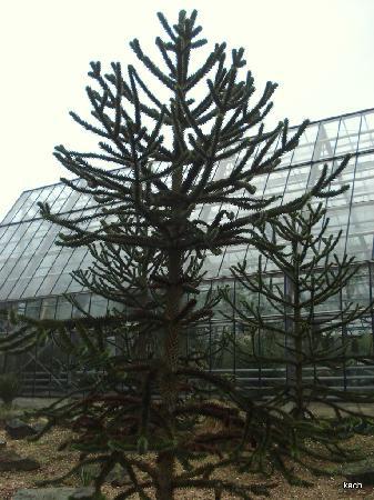 Botanischer Garten (Ruhr Universitat Bochum): Side view of the Garden Glass House