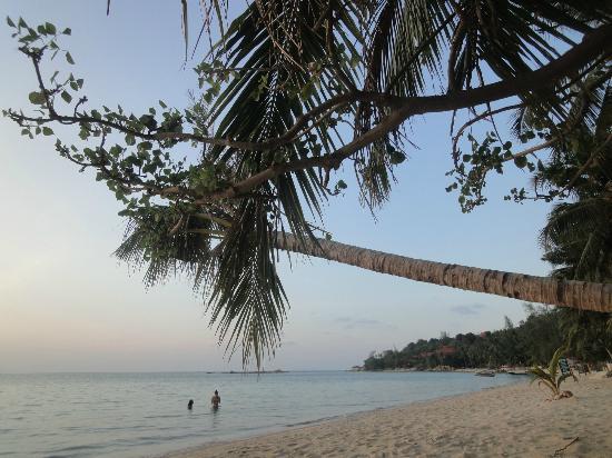 Seaflower Bungalows: coconut palms