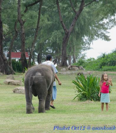 Marriott's Phuket Beach Club: Lucky the baby elephant