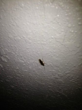 Americas Best Inns & Suites: Just one of the bugs I saw crawling around on the wall during my stay.