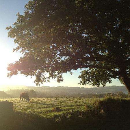 Fforest Farm: Morning View from Fforest Crog Lofts
