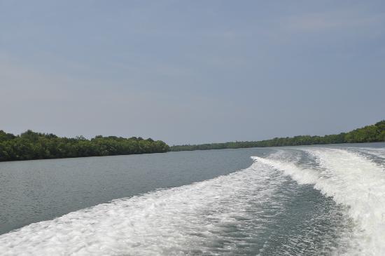 Kura Kura Resort : Landscape from the boat