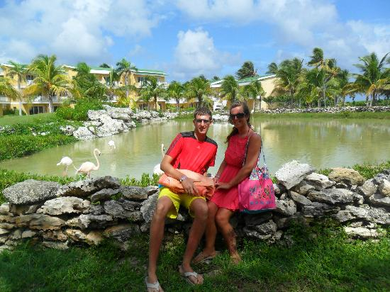 TRYP Cayo Coco: flamingo pond at the resort
