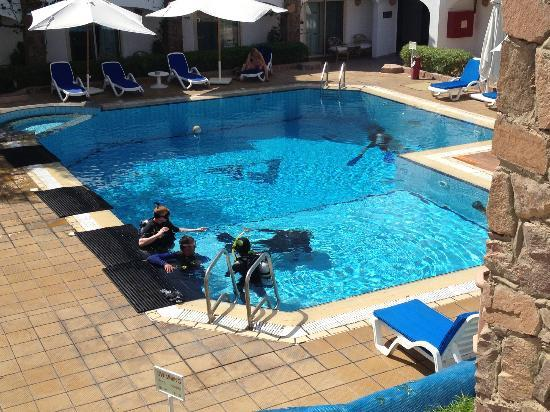 Camel Dive Club & Hotel : Pool