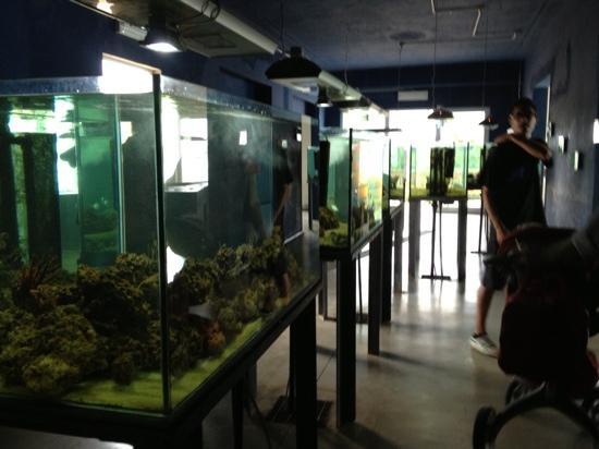 Aquarium Laguna di Nora: aquarium
