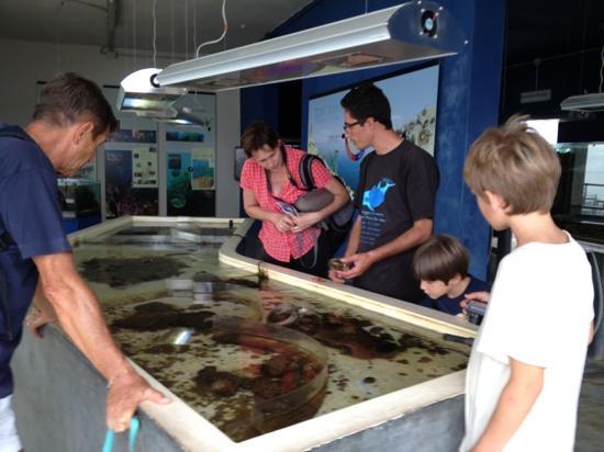 Pula, Italy: imprendibile la vasca del Benthos! credo unica in Sardinia, varie specie possono esser proprio t