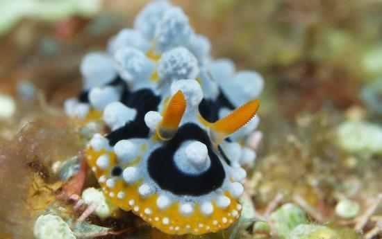 Easy Diving and Beach Resort: Unterwasser