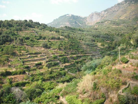B&B Casa vacanze il Gatto: Beautiful hillside view from Il Gato