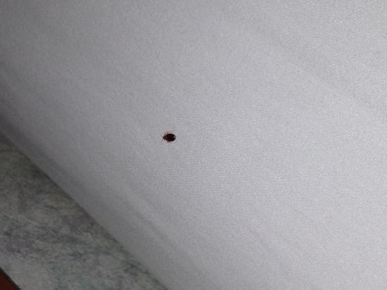 Bed Bugs Atlantic City Hotels