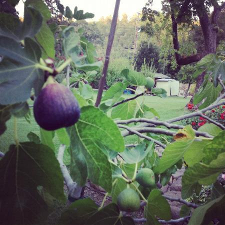 Spanish Villa Inn: mmm Figs