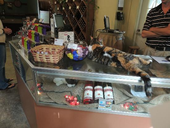 Knapp Winery & Vineyard Restaurant: The cat with a stuff one for sale below!