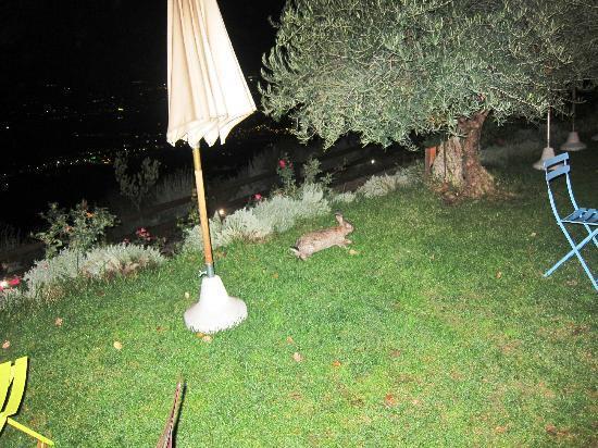 Le Mandrie di San Paolo: la fauna...