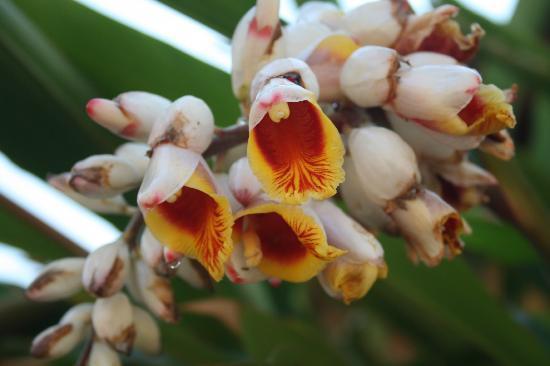 Maguga Lodge: bloemenpracht
