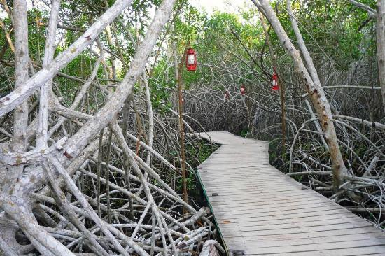 Decameron Baru: mangroves by the beach