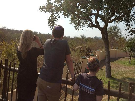 Muweti Bush Lodge: Watching the elephant right outside of the wall