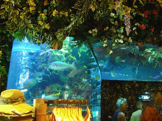 Rainforest Cafe Atlantic City Nj From Me