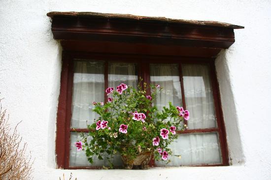 Casa cu Zorele: Yard