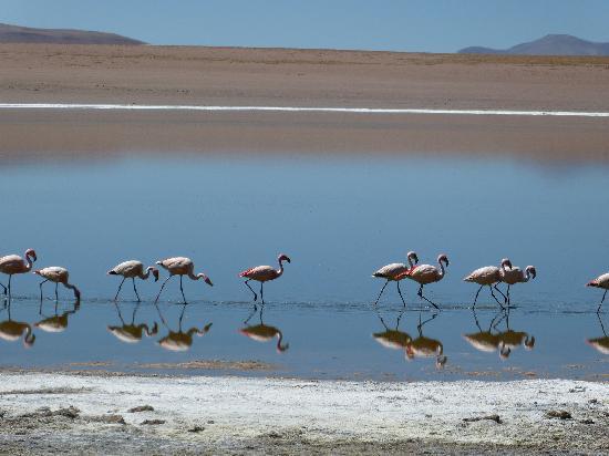 Hotel La Torre: Salar flamingoes