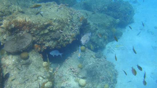 Harbour Village Beach Club: unterwasserwelt vor dem hotelstrand3