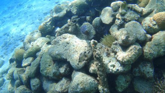 Harbour Village Beach Club: unterwasserwelt vor dem hotelstrand