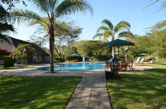 Lake Naivasha Simba Lodge : piscine au matin