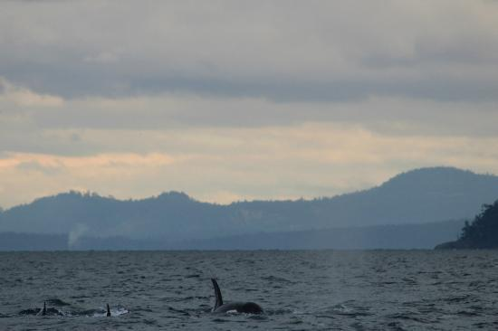 Eagle Wing Whale Watching Tours: A few of the whales we saw:
