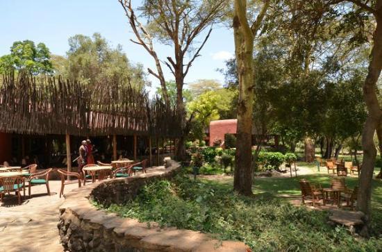 Amboseli Serena Safari Lodge: extérieurs