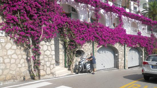 Hotel Miramare: Purple Flowers Everywhere
