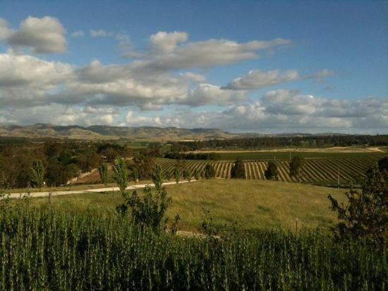Abbotsford Country House: Fantastic views of vineyards