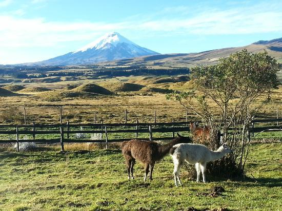 The Secret Garden Cotopaxi: Vue