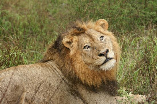 Mvuradona Safari Lodge: One of our big 5 caught on camera!